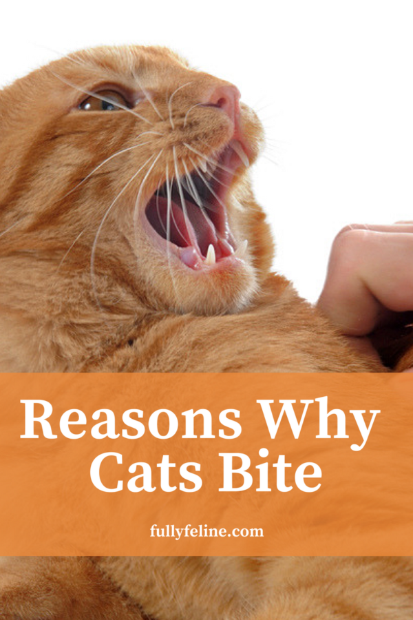 how to understand cat behavior
