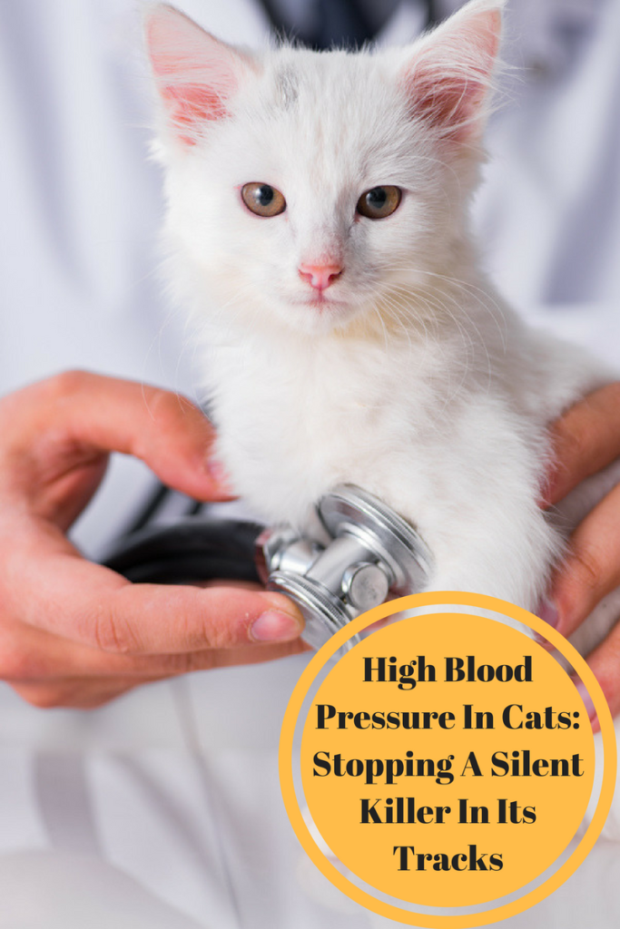 high blood pressure in cats