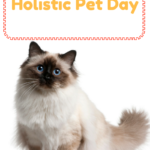 Holistic Pet Care: Is It The Right Choice For Your Pet?