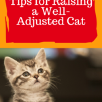 Kitten Care: Tips for Raising A Well-Adjusted Cat