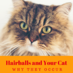 Hairballs and Cats: Why They Occur and How to  Prevent Them