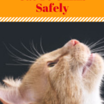 Training Your Cat To Climb Safely
