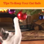 Cat Safety: Five Holiday Hazards For Cats
