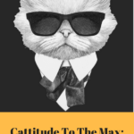 Cattitude To The Max: Fun Cats of the Week