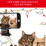 Holiday Photo Contest: Let's See Those Holiday Kitty Pics!