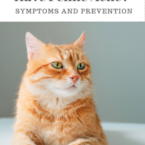 Feline Acne:  What You May Not Know About Symptoms, Prevention