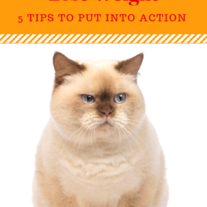 Pet Obesity Prevention In Cats: 5 Tips To Help Your Cat Lose Weight