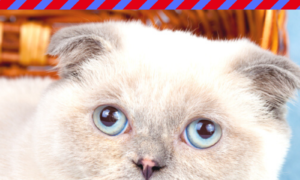 July 4th Cat Safety Tips: Keeping Cats Safe and Calm