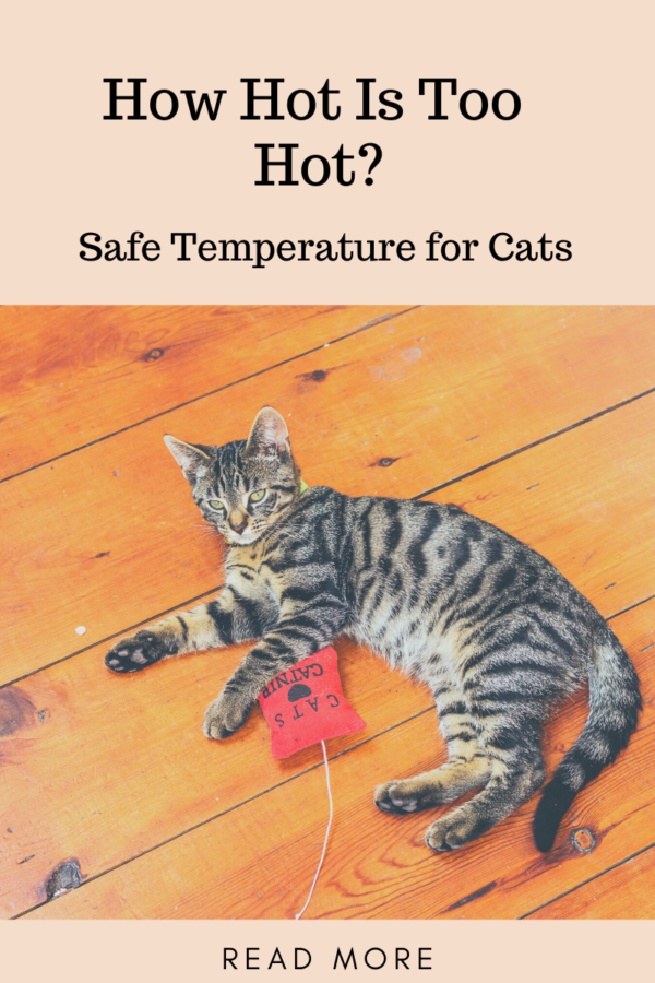 safe temperature for cats shows tabby cat laying on bare wood floor to stay cool